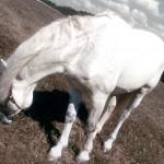 Pferd Edit