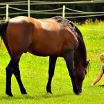 Pferd_BLC_022