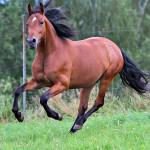 Pferd_BLC_049