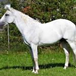 Pferd_BLC_078