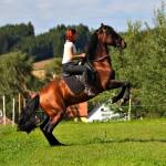 Pferd_BLC_125