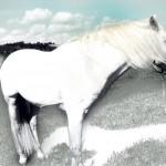 Pferdemood 1a